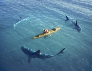 a kayaker surrounding with sharks