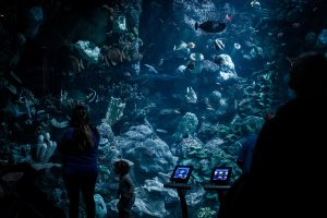 Beauty Giant Aquarium